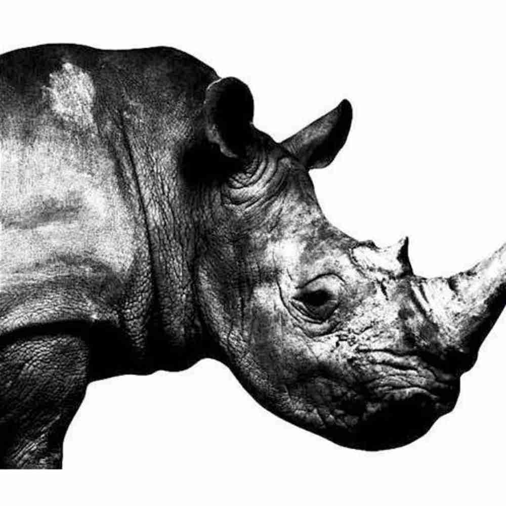 Tomorrow never knows / Mr.Children のジャケット